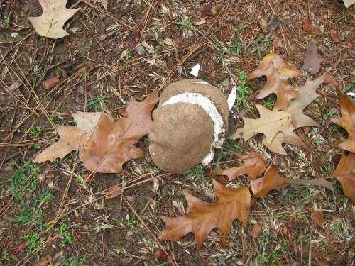 Kartoffel - Bild Potato von Natalie Maynor / flickr.com / cc by-nd 2.0